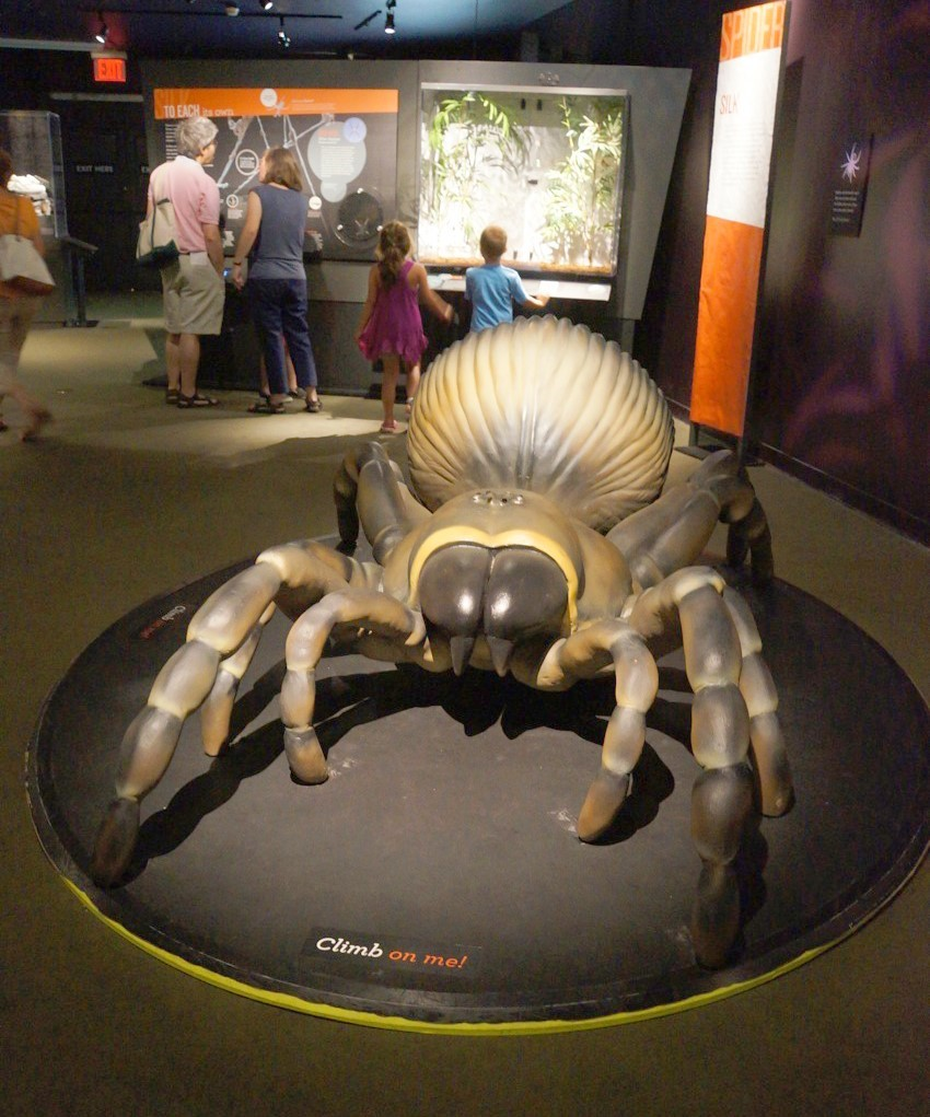 American Museum of Natural History, Spiders Alive